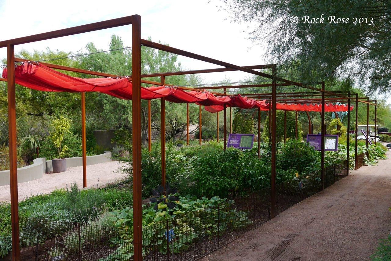 Rock rose it 39 s hot in the desert botanical garden for Garden structures plans