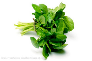 benefits_of_eating_watercress_fruits-vegetables-benefits.blogspot.com(8)