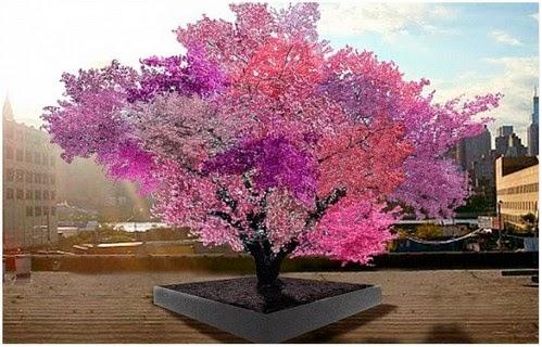 Menakjubkan Pokok Luar Baisa Ini Mampu Menghasilkan 40 Jenis Buah Yang Berbeza