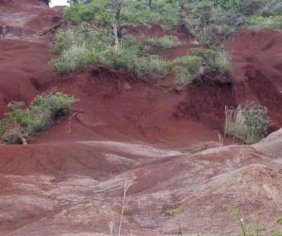 Jenis Jenis Tanah