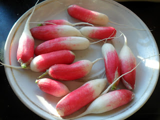 10 августа, плоды редиски второго посева