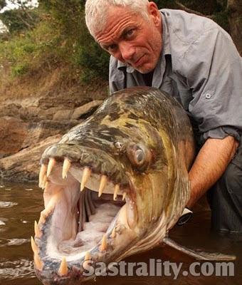 Ikan Pemangsa Buaya Terbesar di Dunia - Saat melakukan