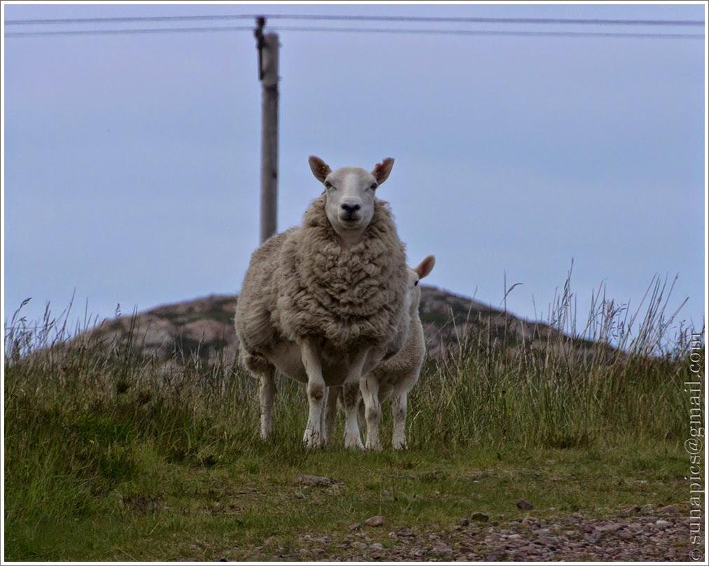 Sunday evening gairloch to badcaul 25 miles diary of a vagabond guardian of loch ewe malvernweather Choice Image
