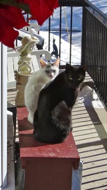 Daisy & Buster cat
