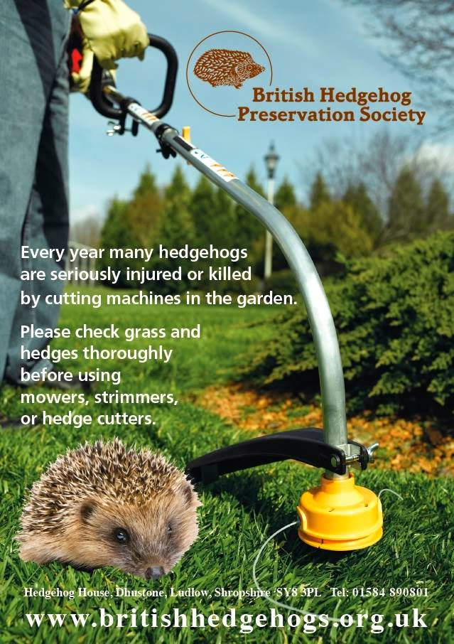 HEDGEHOGS IN NEED OF YOUR HELP ....