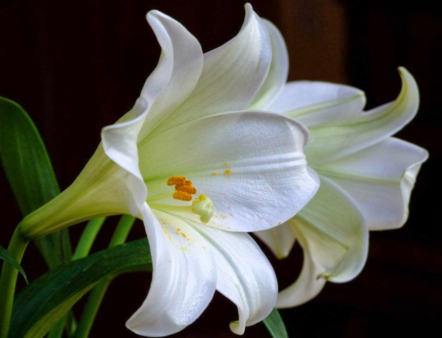Lily Flower Wallpaper Hd Wallpapers