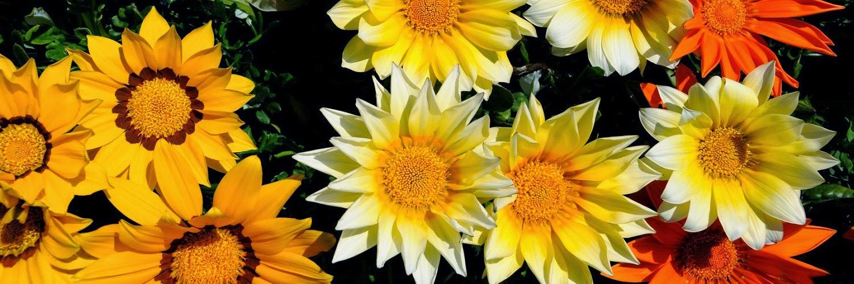 Twitter Header Nature Yellow Flowers 1500x500