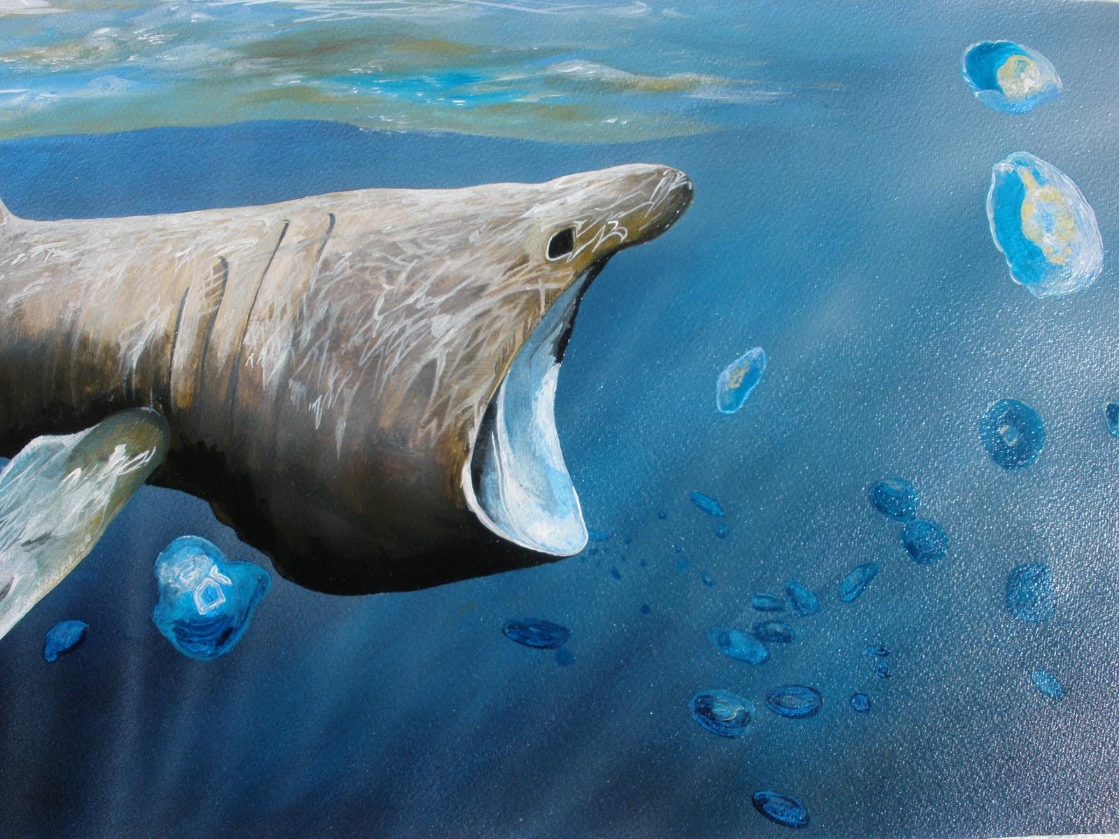 Dunford's Art Studio: Basking Shark