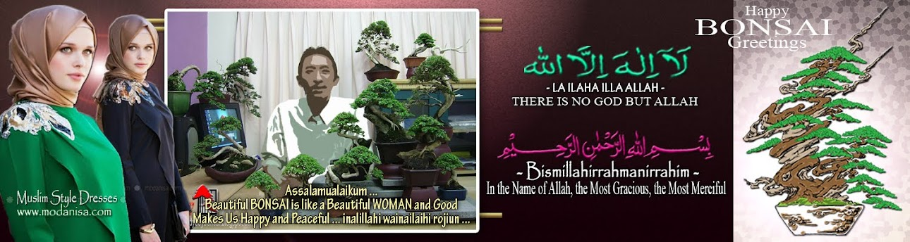 bonsai turkey hijab moslem jilbab islam modanisa fashion