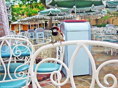 Disneyland Bird River Belle Terrace Restaurant birds crumbs food mooch
