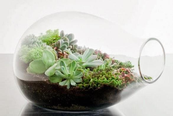 mini jardins em vidro:Decoração – Mini Jardins em vidros, o Jardim da Moda! ~ Diário do