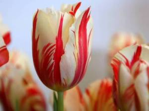E por falar em Flores ......