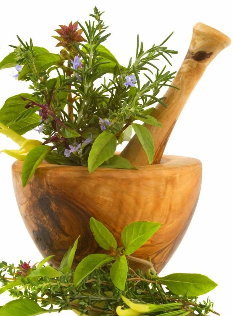 Plantas Medicinais - Clique na imagem para acessar