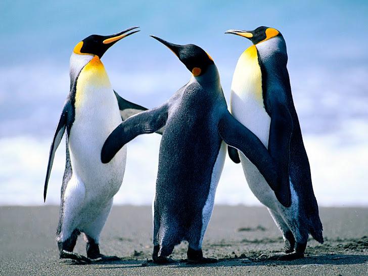 Foto de unos  pinguinos