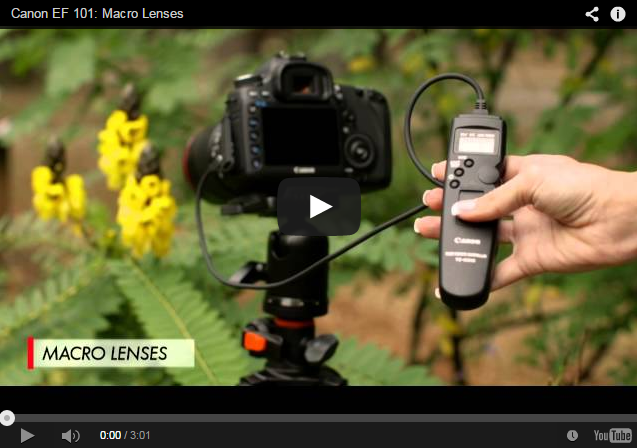 Learning more about Canon EF Lenses: Canon EF / EF-S Macro Lenses