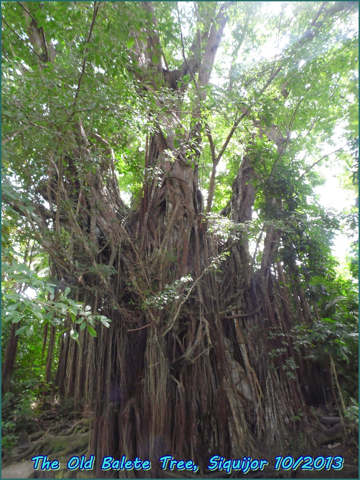 old balete tree, siquijor
