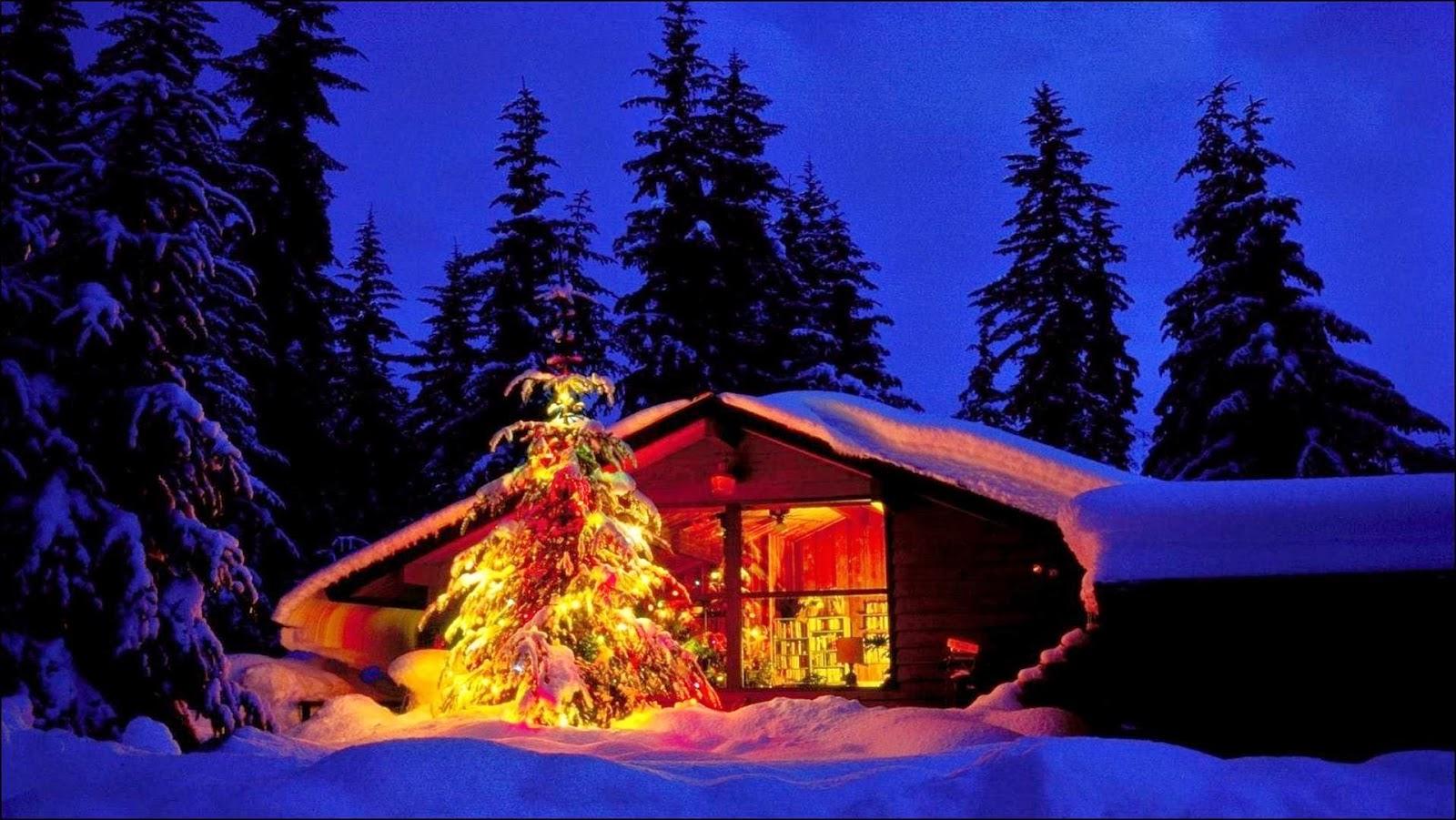 Fotografía de cabaña con arbol iluminado