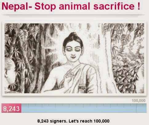 Gadhimai, la diosa que mata más animales en el mundo