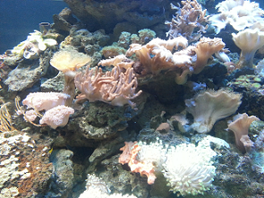 marine coral invertebrate tank