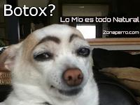 zonaperro.com