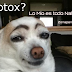 Cirugía plástica y estética en perros