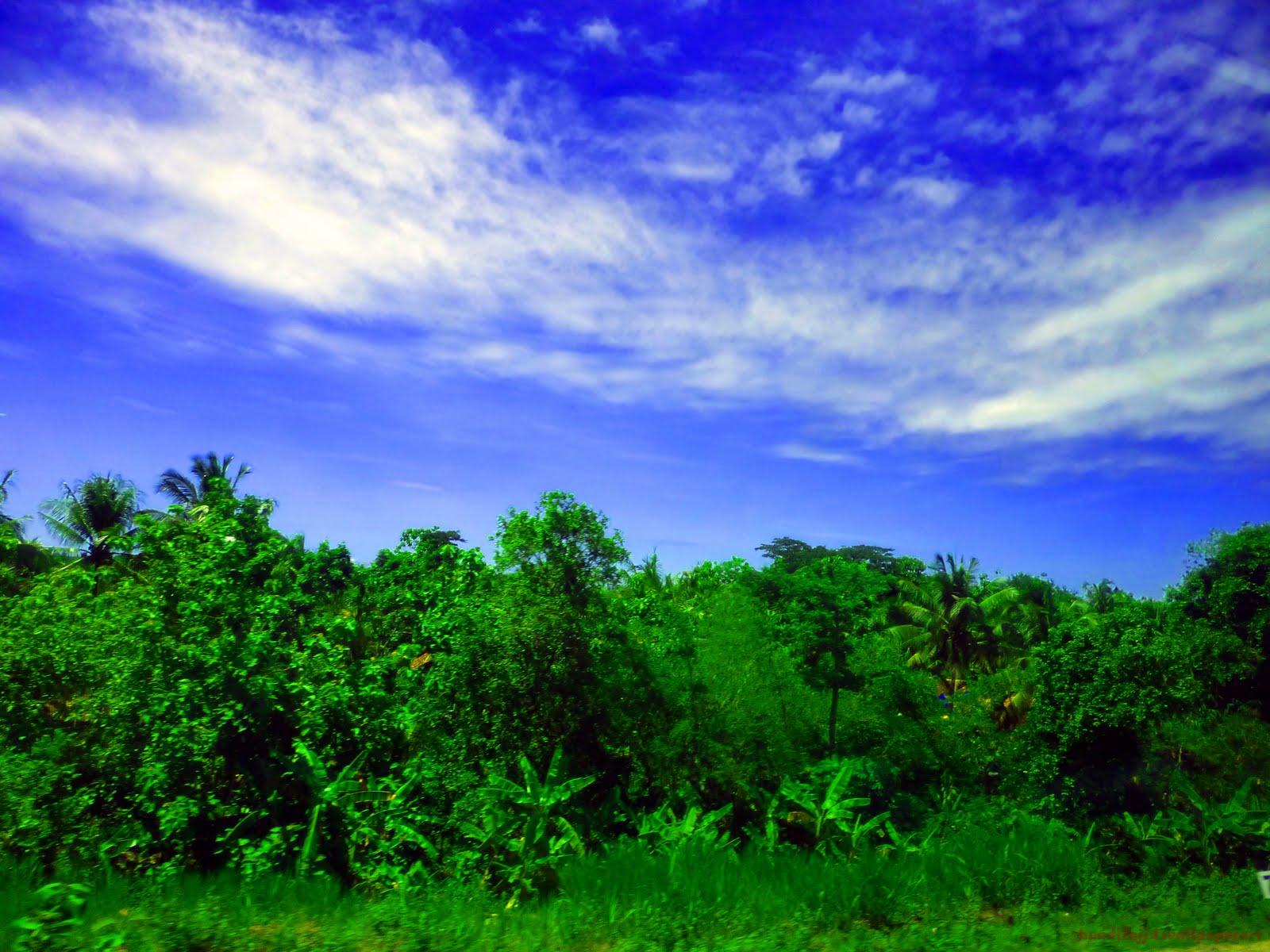 http://4.bp.blogspot.com/-LRS0A1nk244/Tvnx6_thBcI/AAAAAAAABIE/I-sVjJHX0BI/s1600/Green%2B-Forest-Blue-Sky-by-banditajj4wallpaperart.jpg