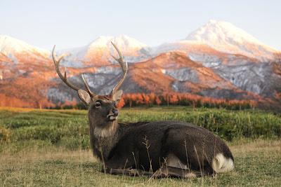 Ciervo en las Montañas Nevadas (Nikon DSLR D3X)