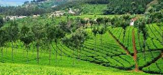 Coonoor India