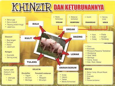kegunaan babi