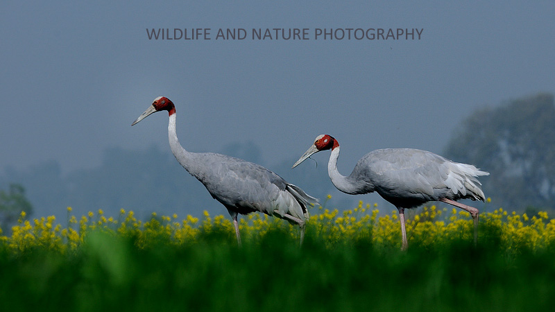 Wildlife and Nature Photography