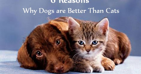 6 Reasons Why Dogs are Better Than Cats