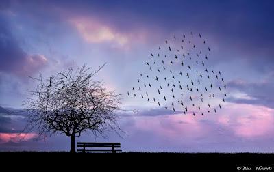http://4.bp.blogspot.com/-LUA8kXXgV2s/Ui137-UToHI/AAAAAAAAFoY/v3mFvVUJoAI/s1600/heart+on+the+Sky.jpg