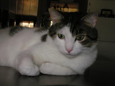 صور قطط أليفة جميلة جدا