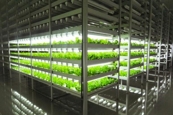 pertanian indoor terbesar di dunia