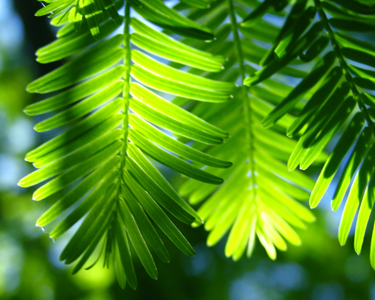 http://4.bp.blogspot.com/-LUXfPU_Wez4/TgnHhDYD09I/AAAAAAAAAbA/C-3Wsbz5UX0/s1600/tropicalparadise1280x1024.jpg