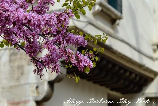 Maggio a Venezia
