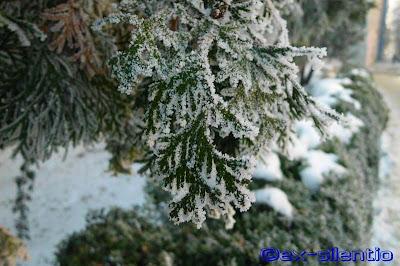 peisaj de iarna brad