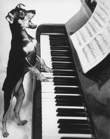 cachorro tocando piano