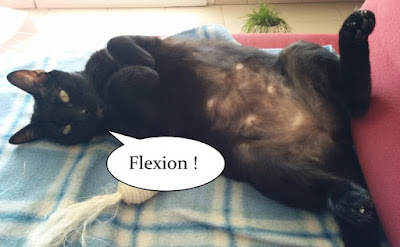 Jolie chatte noire de l'école du chat libre de toulouse.