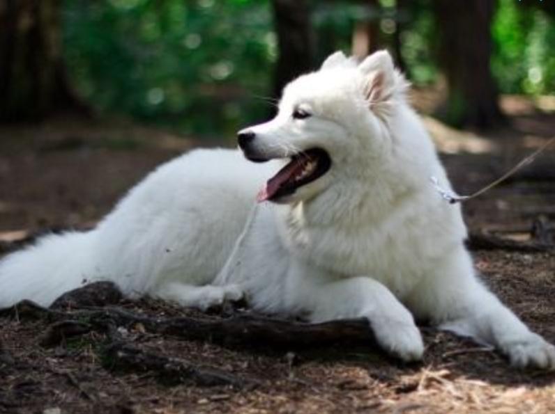 Leash On Me: 23 Friendliest Dog Breeds