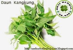 manfaat dan khasiat dari daun kangkung