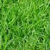 Verbod op onttrekken oppervlaktewater voor beregenen grasland