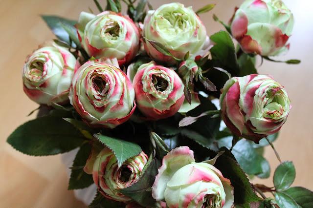 Rosen im Advent