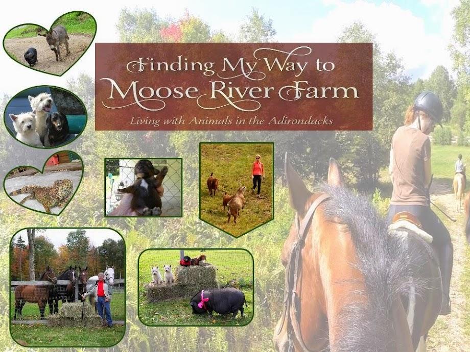 Moose River Farm Blog