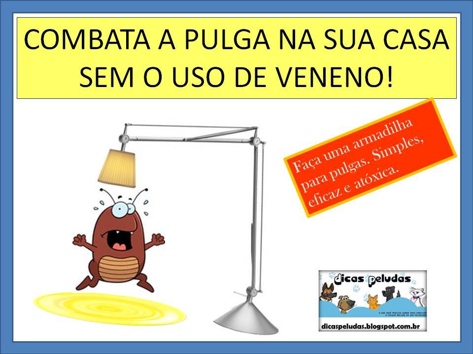 Armadilha caseira para combater pulgas sem uso de veneno dicas peludas - Matar pulgas en casa ...