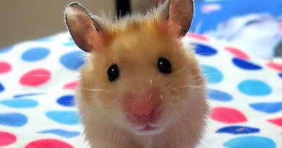 Image Result For Cerita Motivasi Perangkap Tikus