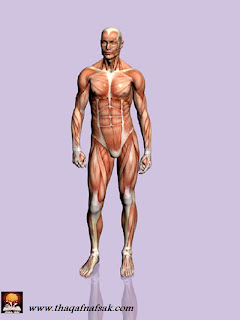 human body حقائق مذهلة عن جسم الإنسان