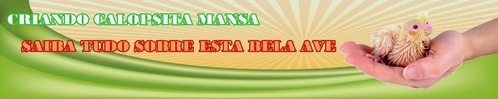 CRIANDO CALOPSITA MANSA