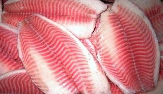 cara budidaya ikan kakap merah di tambak,kakap merah air tawar,kakap putih,memasak,masak,kandungan gizi,resep,harga,