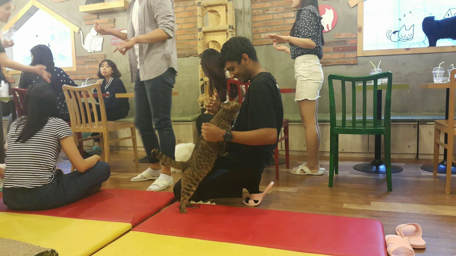 cat cafe in Hongdae, Seoul